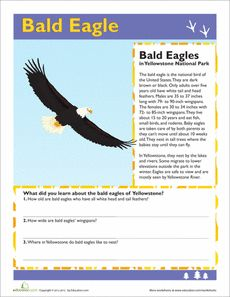 You know bald eagles are a symbol of America; now learn some of the interesting facts of these birds. Science Projects For Kids, Science For Kids, Eagle Facts, Reading Comprehension, Comprehension Worksheets, School Worksheets, Science Worksheets, Science Stations, Third Grade Science