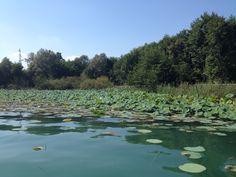 Fiore di Loto - Lago di Viverone - Piemonte