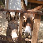 Urlaub auf dem Bauernhof am Gardasee, Agriturismo Collini Ferienwohnungen mit Restaurant und Seesicht