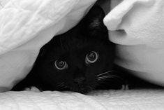 Black cat ♥