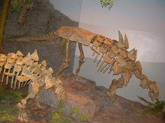 Gastonia_burgei_skeletons.JPG (2272×1704) - North American Museum of Ancient Life. Auteur : Ninjatacoshell. 2009