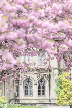 """Cherry blossoms at Grace Church on Broadway, photographed by bestselling author/photographer Georgiana Lane, for her book """"New York in Bloom"""" #newyorkcity #newyorkflowers #newyorkinbloom New York Photography, Floral Photography, Artistic Photography, Travel Photography, Gothic Windows, Spring In New York, French Home Decor, Flower Market, Cherry Blossoms"""