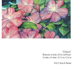 Clematis watercolour painting on Arches 140 lb Cold Pressed. ©Tarja K. Kuronen 2011.