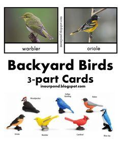 Free Backyard Birds 3-part Cards from In Our Pond