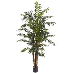 5' Bamboo Palm Silk Tree * Be sure to check out this awesome product.