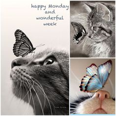 Happy Monday .. and wonderful week ✨