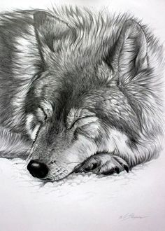 Realistic Animal Pencil Drawings (3)