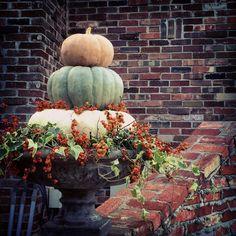 Topiary Pumpkin Topiary l Unique by Design - Pumpkin Display, Autumn Decorating, Decorating Ideas, Decor Ideas, Pumpkin Topiary, Fall Containers, Fall Planters, Autumn Garden, Fall Diy
