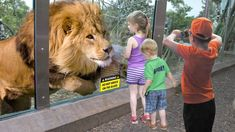 Kids and wild animals At The Mountain Zoo: Fun Lion and Elephant with kids