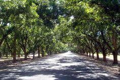 Stahmann Pecan Farm in Las Cruces NM @Danelle Brennan