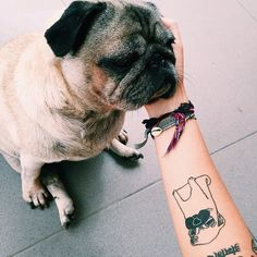 Just look at this pug sitting in old-man style! The fact that the human has a pug tattoo just puts this photo over the top for me. Love it!