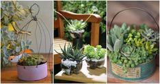 Ideas para hacer pequeños terrarios - Manualidades Cactus, Succulents, Plants, Diy, Gardens, Molde, Decorated Flower Pots, Container Gardening, Recycled Bottles