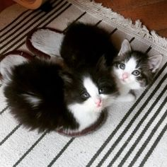 Have you ordered you slipper warmers this winter?