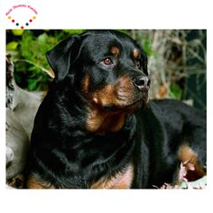 diy Diamond embroidery Animal black dog full round 5D Diamond Mosaic beaded Cross Stitch canvas painting #Affiliate