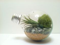 I am sure you love terrariums, and you can make your own terrarium with these unique DIY ideas for your indoor garden. Indoor terrariums are adorable and perfect for your indoor settings. Terrarium…
