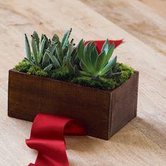 Duet Succulent Trough. $48. Olive & Cocoa