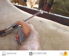 Doenças que afetam a reprodução dos bovinos de corte #cursoscpt
