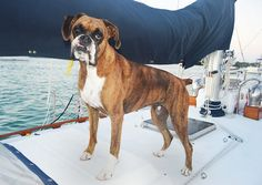 S/V Wanderlust - Sailing Blog - Travel, Stories, Photos, Tips a | Outfitting a Sailing Pup - Gear We Use to Keep Our Pup Afloat