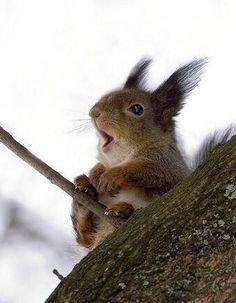 Ooh, it's a windy day