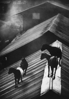 W. Eugene Smith - Goats on the roof, 1954