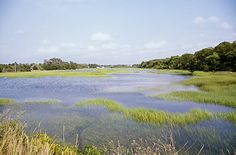 Cape Cod Coastal salt marsh
