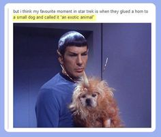 I found this more funny than it should have been- lol poor puppy does not look amused