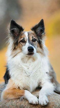Beautiful Dog Breeds, Beautiful Dogs, Animals Beautiful, Animals And Pets, Baby Animals, Funny Animals, Cute Animals, Cute Little Puppies, Cute Puppies