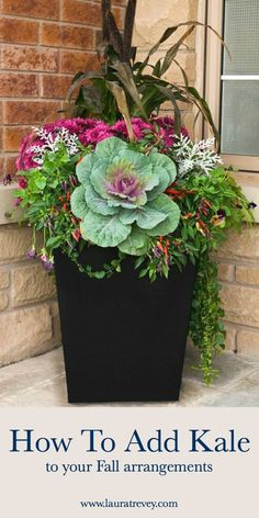 How to add Kale to your Fall arrangements #fall #gardening #containergardens