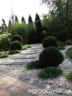 Na zielonej... trawce :) - strona 3 - Forum ogrodnicze - Ogrodowisko