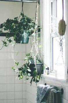 Colgar plantas