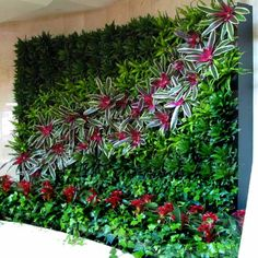 It happens naturally outdoors. Vining plants creep and climb and cover walls and other vertical surfaces. Indoors the same affect takes a little planning and work, but the results can be spectacular. The living wall pictured here is the creation of Plantscapers (www.plantscapers.com), an Irvine, California company specializing in interior plant design since 1981. This is their new Interior Green Wall System. It looks great and keeps the indoor air really clean.