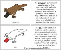 Platypus Nomenclature Book (in red): illustrates and describes 14 parts of the Platypus