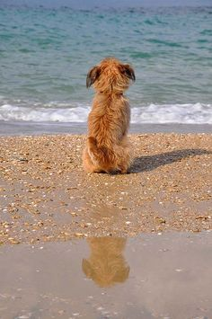 Even pets dream of the beach Baby Dogs, Dogs And Puppies, I Love Dogs, Cute Dogs, Tier Fotos, Mans Best Friend, Pets, Doge, Dog Life