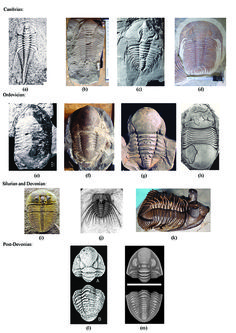 All about trilobites!