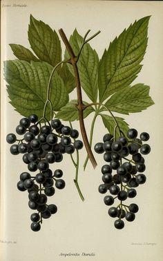 http://bibliotheque-numerique.hortalia.org/items/viewer/1874?ui=embed