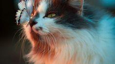 Spirit Animal Quiz, Find Your Spirit Animal, Animal Spirit Guides, Animal Espiritual, Cat Nose, Foster Kittens, Sensitive People, Highly Sensitive, Beautiful Cats