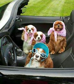 Hop in! Road trip!