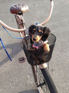 Going for a ride.