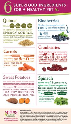 Best Treats For Dogs In 2019 - Our Pups Deserve The Best Spring Naturals is a complete family of dinners and treats for pets designed to provide no-compromise nutrition for your best friend. While a new brand to Global Pet Foods, you'll find it many of ou Food Dog, Make Dog Food, Vegan Dog Food, Human Food For Dogs, Home Cooked Dog Food, Puppy Food, Best Dog Food, Dog Treat Recipes, Raw Food Recipes