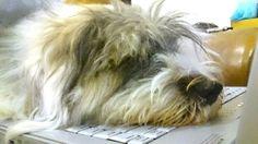 Tired dog...