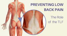 New Perspectives on Back Pain: Does the Thoracolumbar Fascia (TLF) Hold the Key to Healing? | YogaUOnline