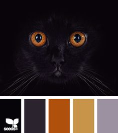 actually think I might use this color scheme in my kitchen and attached living area.  not so much black though.   probably use the orange colors on the walls. (darker on bottom of course.)