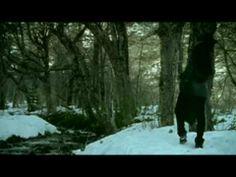 Luciano Pereyra ~~~ La distancia
