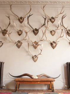The Caledonian Mining Expedition Company: Alex MacArthur (forever) Diy Interior, Interior And Exterior, Interior Design, Antler Mount, European Mount, Deer Mounts, Trophy Rooms, D House, Elements Of Style