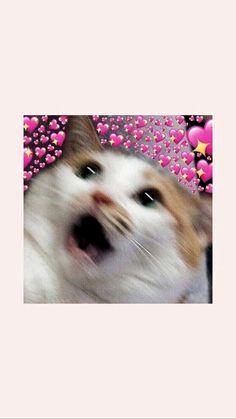 Source by ritusinghk videos wallpaper cat cat memes cat videos cat memes cat quotes cats cats pictures cats videos Vans Wallpaper, Tier Wallpaper, Cute Cat Wallpaper, Cute Wallpaper Backgrounds, Animal Wallpaper, Iphone Wallpaper Cat, Aztec Wallpaper, Wallpaper Samsung, Iphone Backgrounds