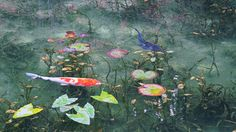 Lizzie, this pond is called Monet's Pond and is in Seki City, Japan (Gifu.) It looks like a Monet painting and it's so relaxing to watch.