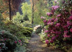 Google Image Result for http://www.plantandgardens.com/wp-content/uploads/2011/04/woodland-garden.jpg
