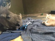 Rescue Cat And Orphaned Rhino Share Bond