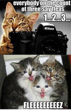 Fleeezzzz.. | Cat Meme