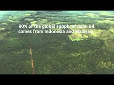 Aerial View of Oil Palm Plantations and Deforestation in Borneo